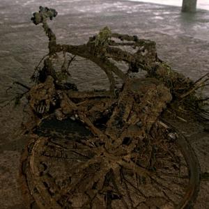 bicicletta_castiglione_scoglio.jpg