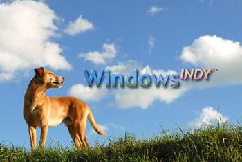 windows indy