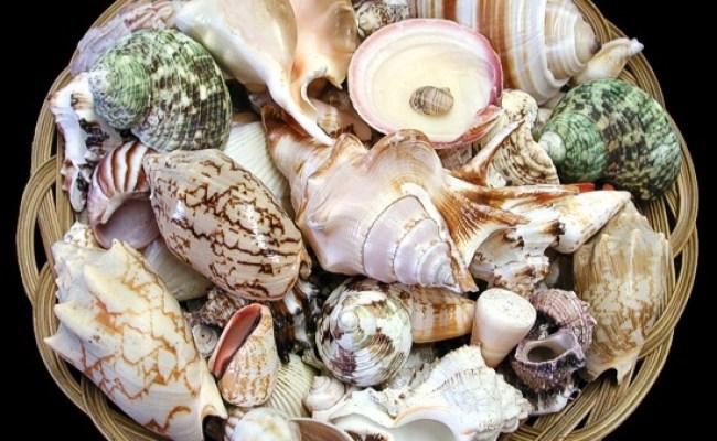 Seashells Gift Baskets Sea Shells Seashell Sea Shell Gifts