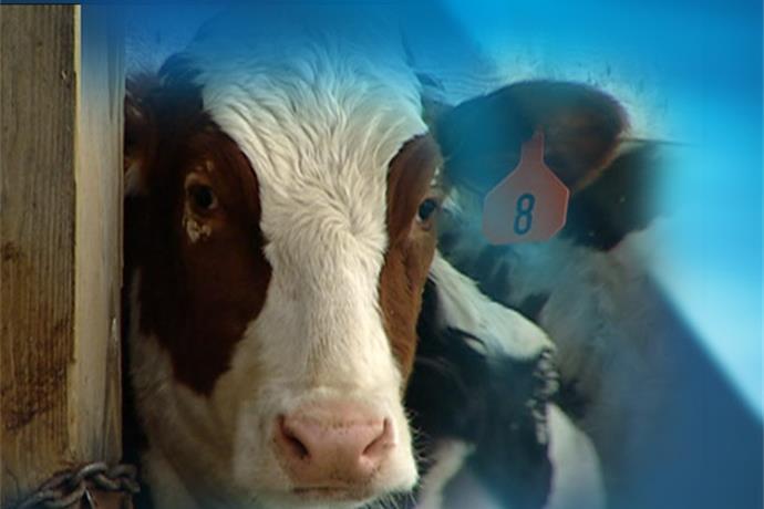 Regional Cattle Workshop_-4654329516190512232