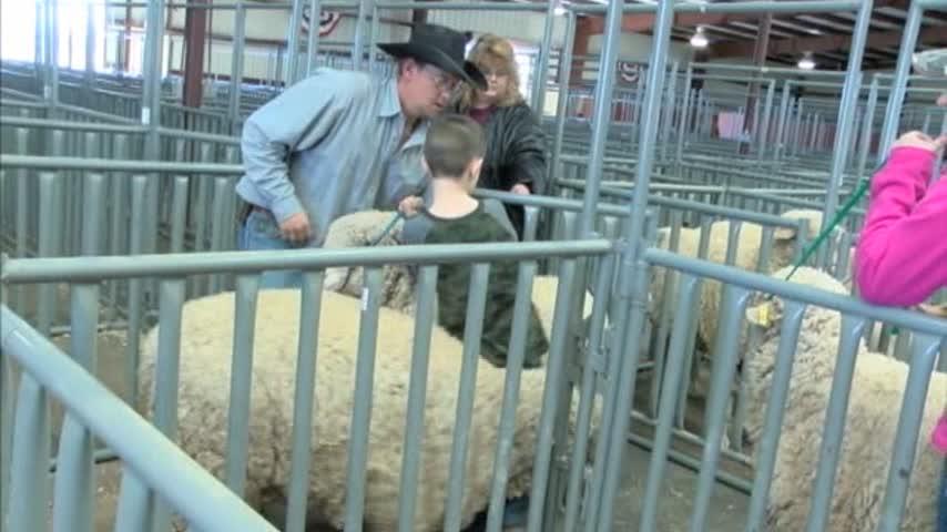 Radde family prepares for Stockshow 020117_03993695