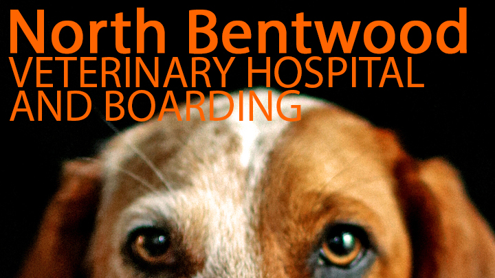 North Bentwood 720x405_1534788839153.jpg.jpg