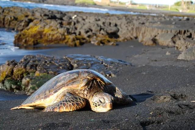 hawkbill-turtle-1364862
