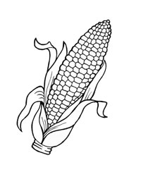 Harvest Corn Coloring Pages Coloring Pages