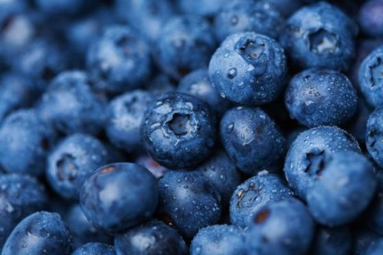 UEA hunt for blueberry fanatics