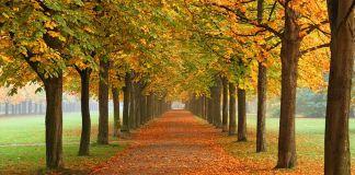 800px-Autumn_in_Dresden, wiki Tomer T