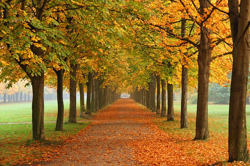 800px-Autumn_in_Dresden, wiki Tomer T
