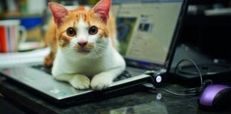 Laptop Cat. Photo: Lisa Omarali, Flickr