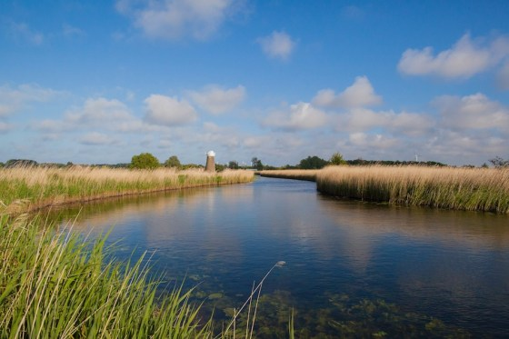 Broads plan set to protect wildlife after Brexit