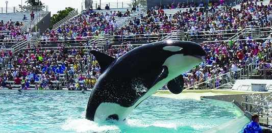 Whale at SeaWorld, Pixabay, Scooby12353
