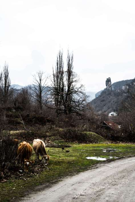 Still life with Katskhi Pillar and livestock.