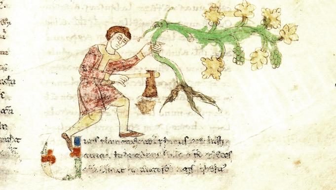 Bebidas de vino en la Alta Edad Media