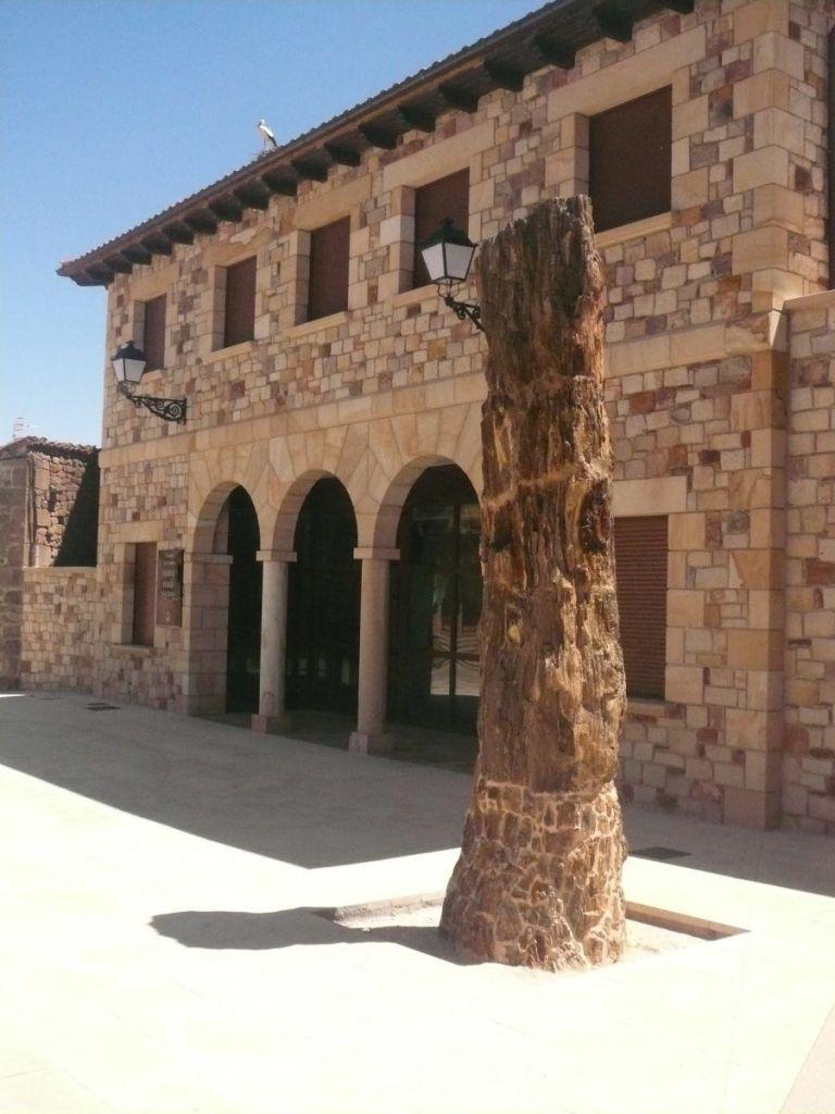 Árbol fósil en Hacinas