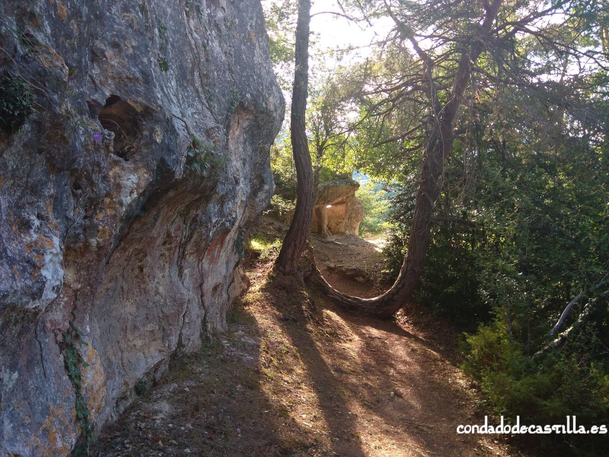 Camino a Cueva Santiago (Pinedo) por el pinar