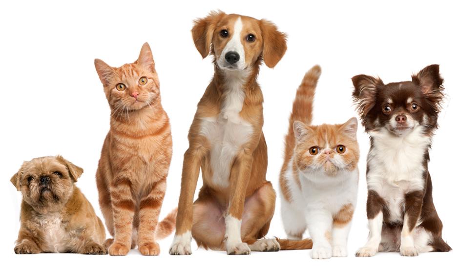 Animais de estimação em condomínios: como fazer de seus bichinhos bons vizinhos