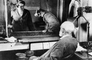 Der berühmte Versuch des russischen Physiologen Iwan Petrowitsch Pawlow 1905: Der Hund im Käfig lernte, dass es jedes Mal Futter gab, wenn das Licht anging.
