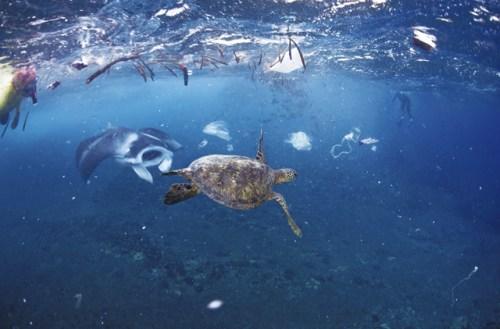 Plastikmüll auch an exotischen Gegenden: Die Verschmutzung der Meere hat die zu Chile gehörende Osterinsel erreicht.