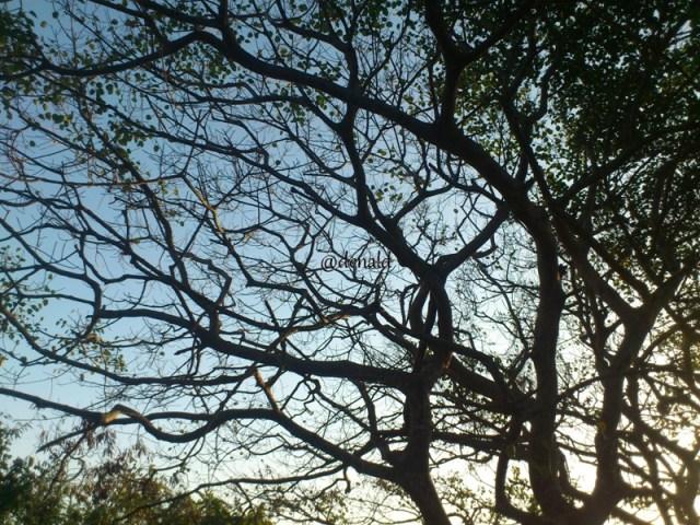 Hutan menuju Pantai Papuma