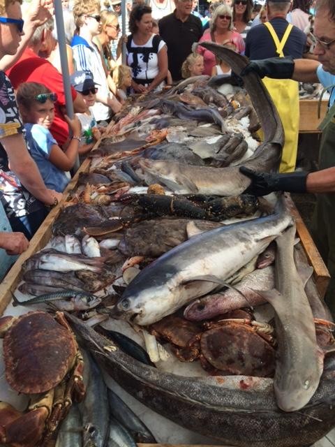 Stand yang penuh pengunjung karena tertarik dengan beragam jenis ikan yang ada disini
