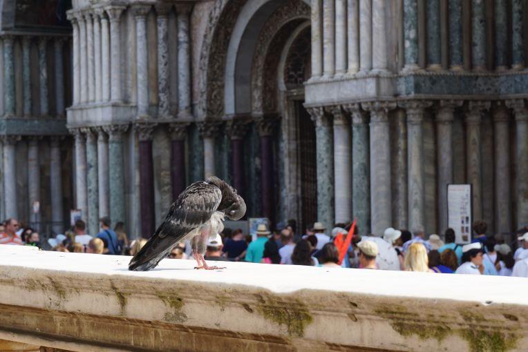Venezia. Yang di depan itu antrian masuk ke St. Mark's Basilica