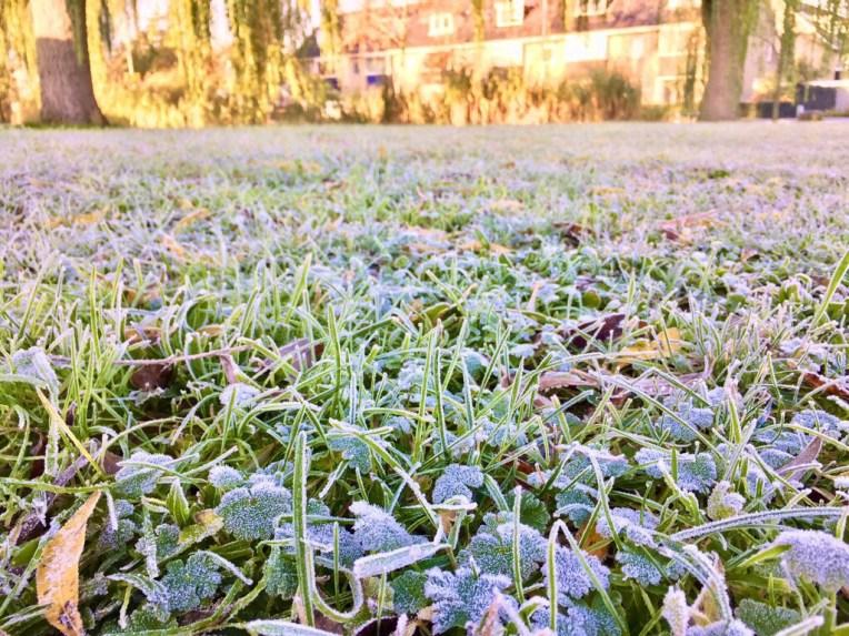 Saat minus satu derajat celcius di pagi hari. Rumput beku tapi matahari tetap nyentrong