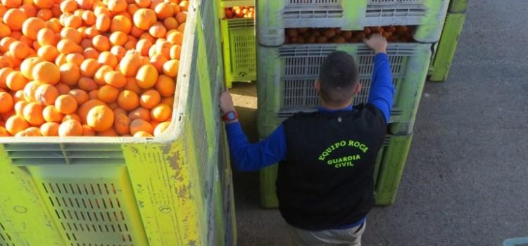 Desarticulado un grupo dedicado al robo de naranjas en campos de la Costera y la Ribera Alta.