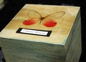 butterfly_05w