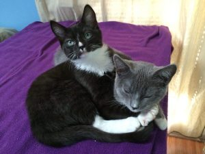 Introducing… Rose and Clara