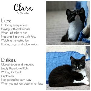 Rose & Clara Are 5 Months Old!