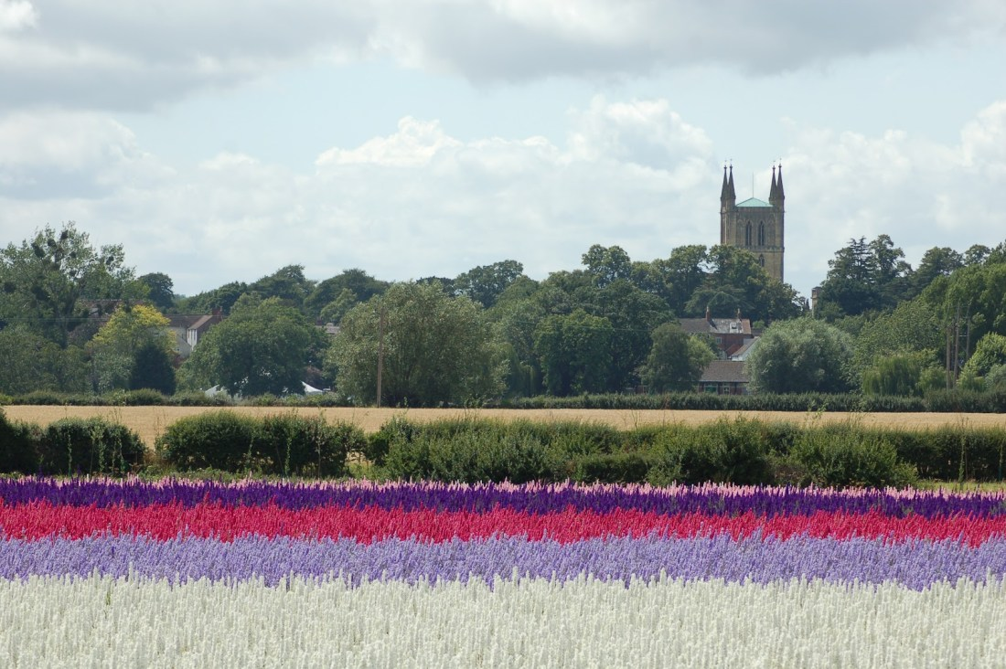 The Confetti Flower Field, The Real Flower Petal Confetti Company, Worcestershire, 2011.
