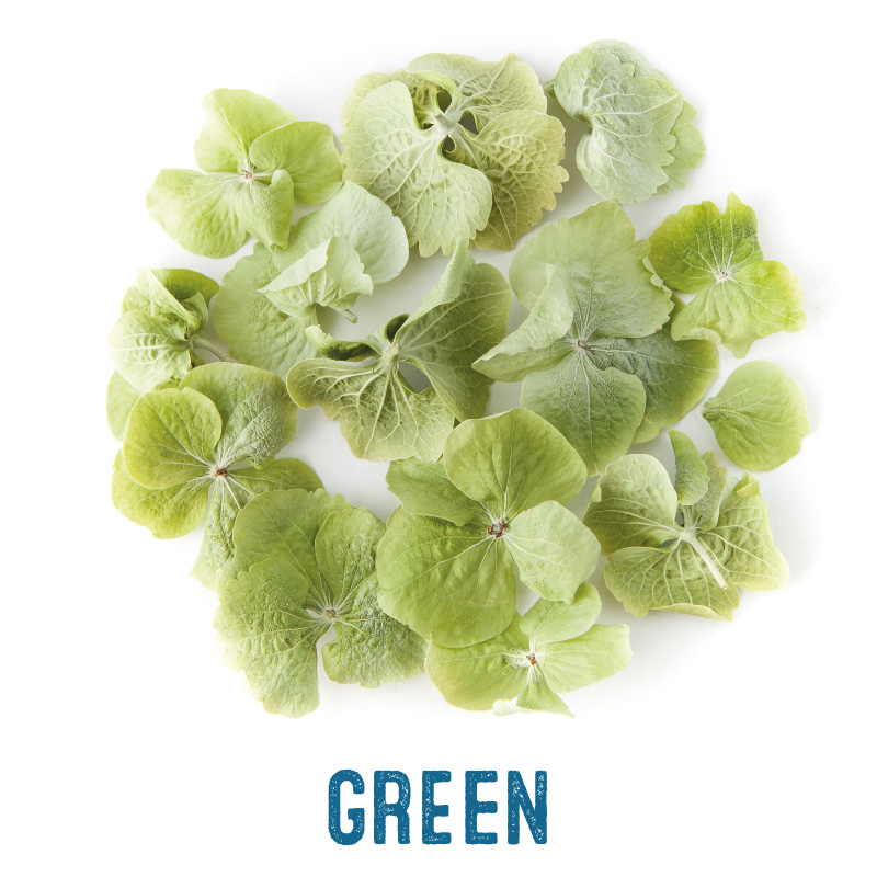 Green Hydrangea Petal Confetti