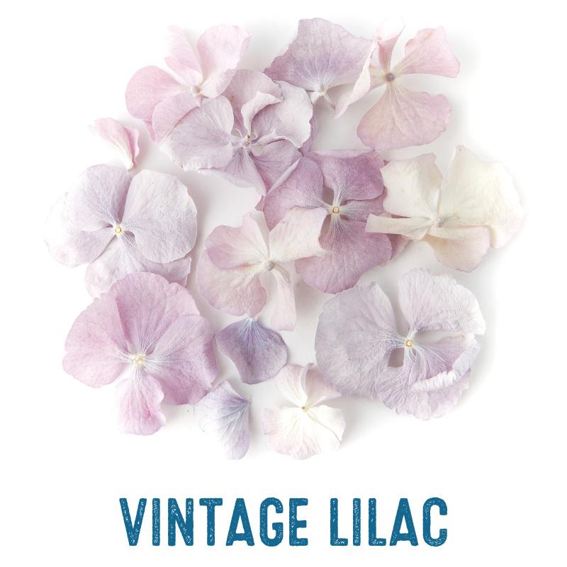 Vintage Lilac Hydrangea Petal Confetti