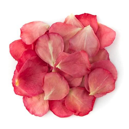 Bright Pink Rose Petals