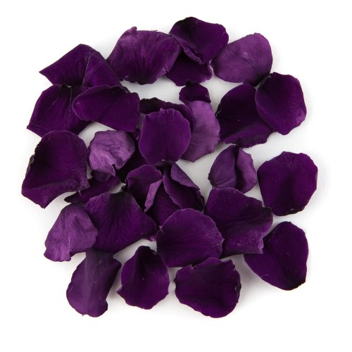 Purple Coloured Rose Petal