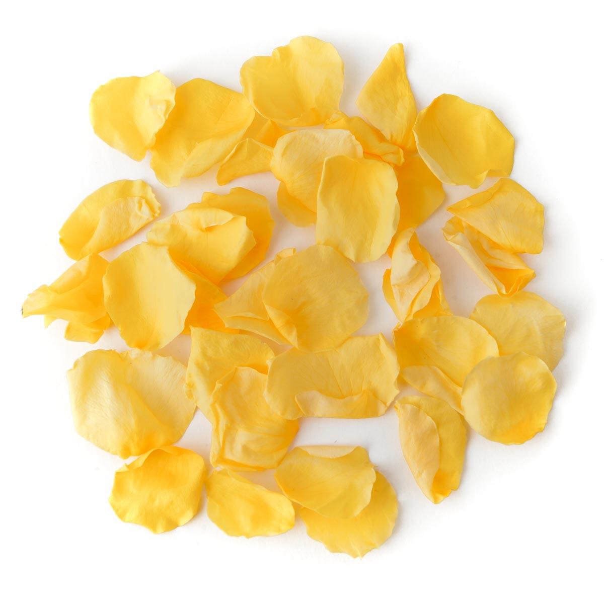 Yellow Coloured Rose Petal