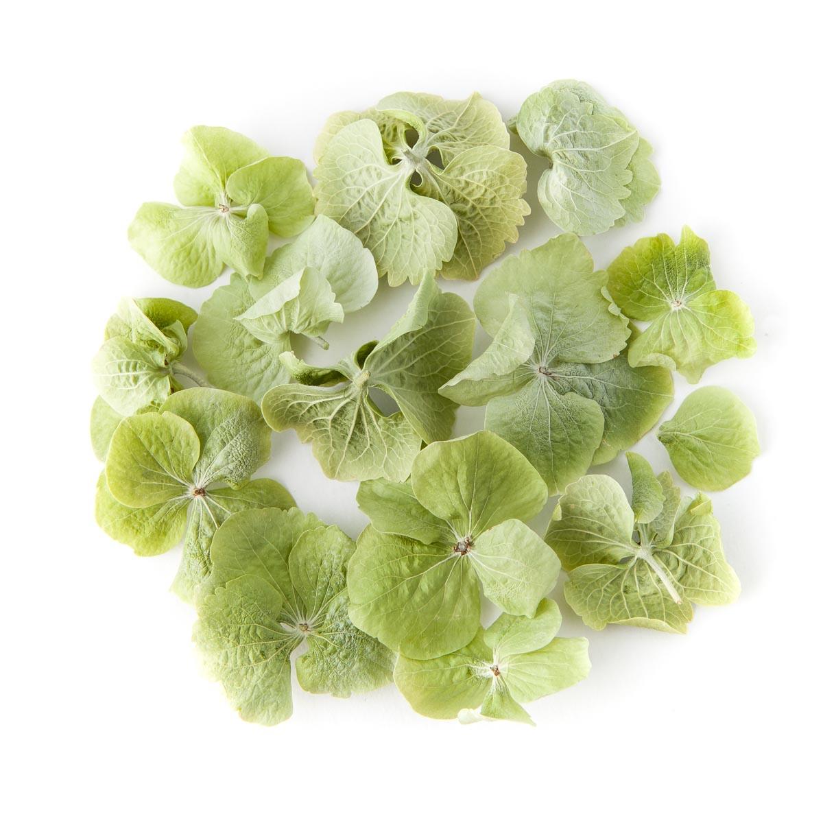 Green Hydrangea Petals