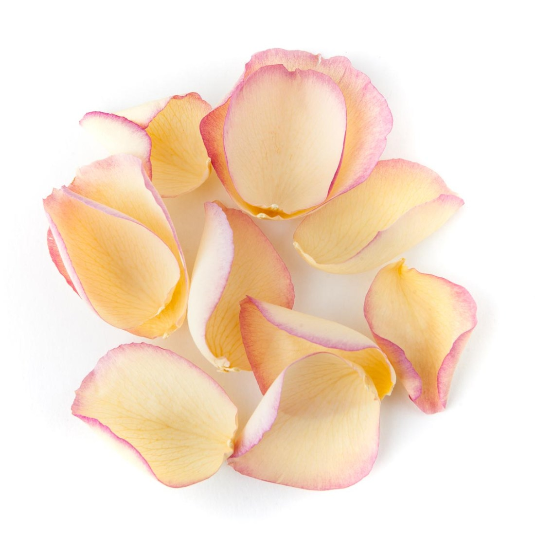 Flower petals - wedding aisles and petal pathways: Pink & Cream Large Natural Rose Petals
