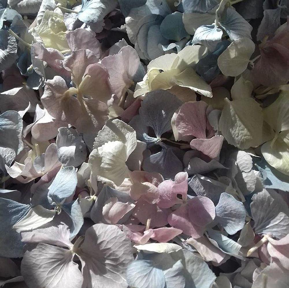 Petal Confetti - Hydrangea Petals