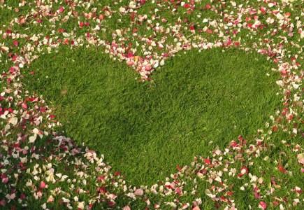 Red Rose Petals - creating petal patterns