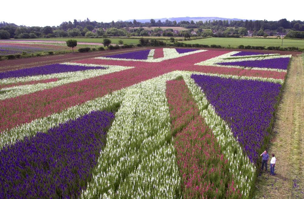 The Real Flower Petal Confetti Company - The Confetti Flower Field Union Jack 2004.