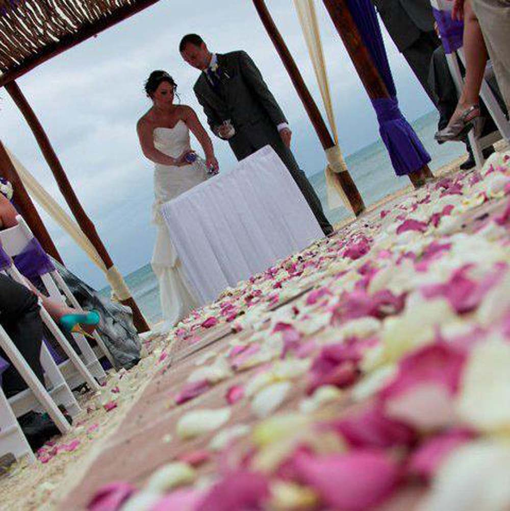 Large Natural Rose Petals down the aisle