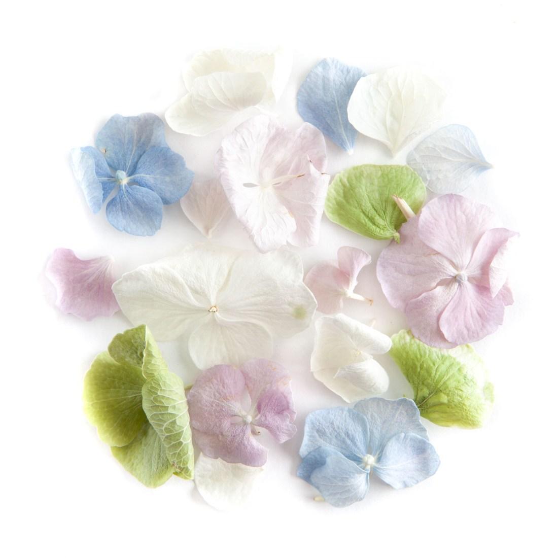 Hydrangea Petal Confetti