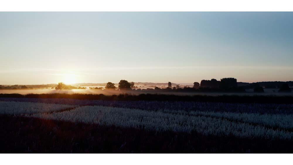 Wick Confetti Field at dawn