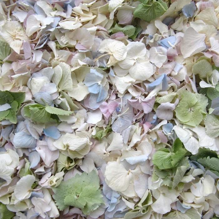 hydrangea petals