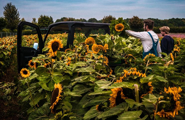 Picking sunflowers for sale. Confetti Flower Field 2020 - photo by Emma Slater @slatershots