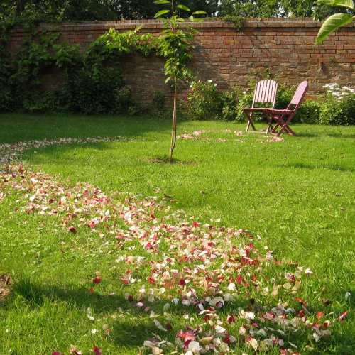 proposal petals