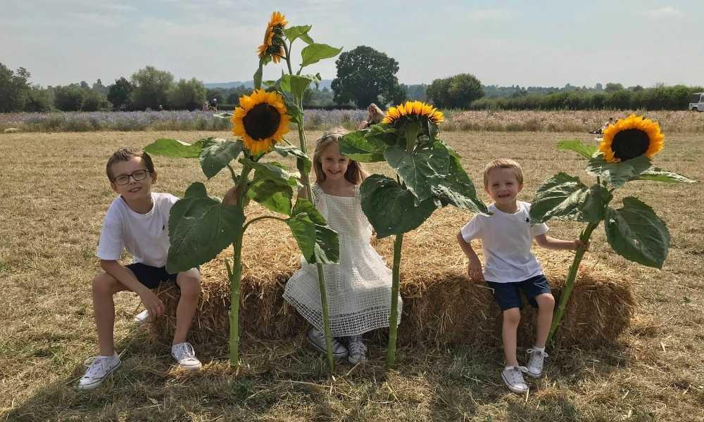 sunflower field wyke manor estate - children with sunflowers