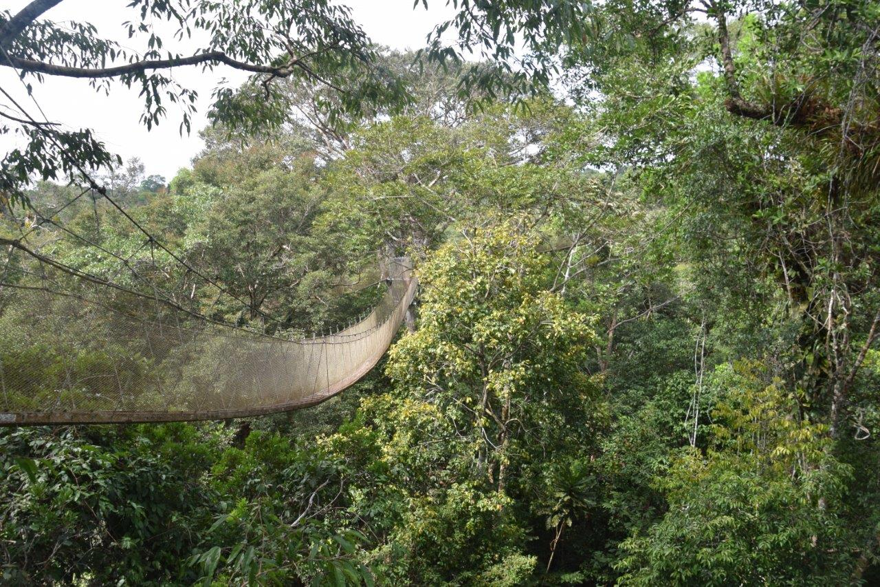 amazon rainforest canopy & Take an Amazon Rainforest Canopy Walk - Confetti Travel Cafe