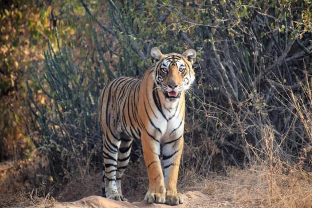 safari at Ranthambhore National Park