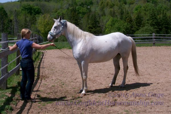 how to teach your horse to bow